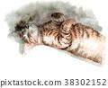 수채화로 그린 낮잠 꿩 호랑이 고양이 38302152