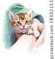 毛孩 貓 貓咪 38302153