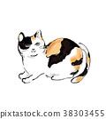 삼색털 고양이, 삼색 얼룩고양이, 삼색 고양이 38303455