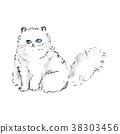 แมวเปอร์เซีย 38303456