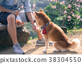柴犬 寵物 戶外 38304550
