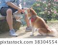 柴犬 寵物 戶外 38304554