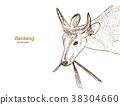 banteng, red bull hand draw sketch vector. 38304660