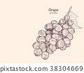 Red grapes. Vector illustration. 38304669