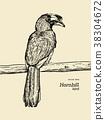 Oriental Pied Hornbill, hand draw sketch vector. 38304672