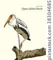 Asian openbill birds on tree branch. 38304685