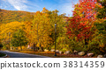 Autumn colors in the park 38314359