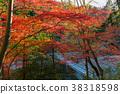 아라시야마 계곡 단풍과 침수 다리 38318598