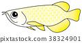 물고기, 생선, 민물고기 38324901