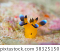 海参 海中珍宝鱼 海底世界 38325150
