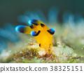 海参 海中珍宝鱼 海底世界 38325151