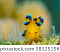 海参 海中珍宝鱼 海底世界 38325156