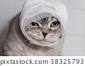 A domestic cat with a bandage.  38325793