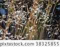 botanic, botanical, alpine plant 38325855
