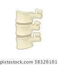 Anatomy of lumbar spine. Part of human backbone 38326101