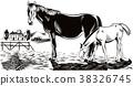 馬兒 駒 動物 38326745