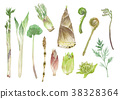 Many wild vegetables watercolor illustration 38328364