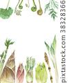山野菜 春蔬 春天的氣息 38328366