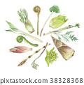 山野菜 春蔬 蔬菜 38328368
