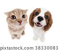 kitten 38330083