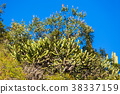 Dry Desert at daylight with cactuses 38337159