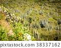 Dry Desert at daylight with cactuses 38337162