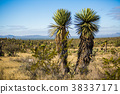 Dry Desert at daylight with cactuses 38337171
