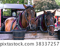Carriage horses 38337257