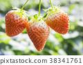 딸기의 계절 38341761