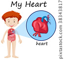 Human anatomy diagram with boy and heart 38343817