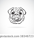 Vector of pug dog face on white background, Pet. 38346723