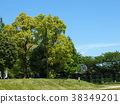树荫 太阳光透过树梢 阴影 38349201