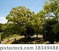 太阳光透过树梢 树荫 透过树叶的阳光 38349488