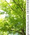 初夏 绿叶 翠绿 38349489