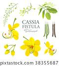 National flower of Thailand, Cassia Fistula 38355687
