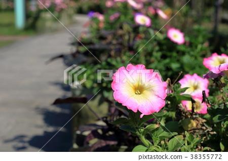 길가의 꽃 38355772