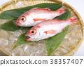 물고기, 생선, 체 38357407