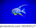 Tropical fish with corals and algae in blue water 38360527