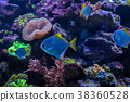 Tropical fish with corals and algae in blue water 38360528