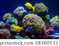 Tropical fish butterfly and corals. Beautiful  38360531