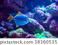Tropical fish with corals and algae in blue water. 38360535