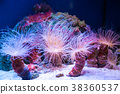 Beautiful live corals on the seabed. Excellent  38360537