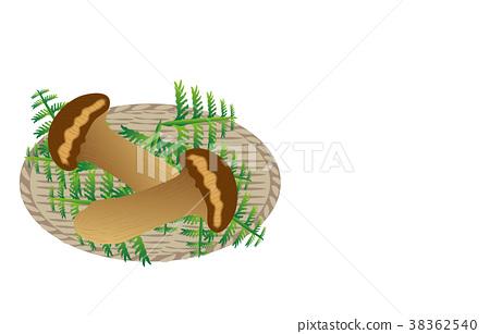 A variety of mountain matsutake mushroom 38362540