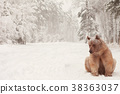 European Brown Bear in a winter forest 38363037