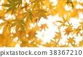 樹葉 葉子 背景 38367210