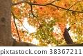 樹葉 葉子 翠綠 38367211