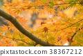 樹葉 葉子 翠綠 38367212