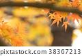 樹葉 葉子 翠綠 38367213