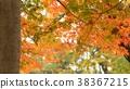 樹葉 葉子 背景素材 38367215