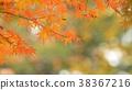 樹葉 葉子 背景 38367216
